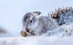 Зайче в снега