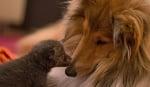 Динозо целува Зива