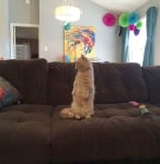 Джордж на дивана