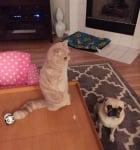 Коте с друго куче