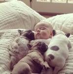 Бебе с булдогчета
