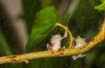 Жаба под листо