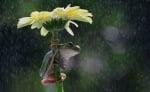 Жаба под цвете