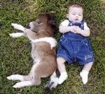 Бебе и пони