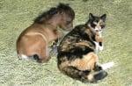 Пони с котка