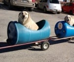 Влакче за кучета от изрязани бидони