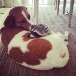 Енотчето и кучето