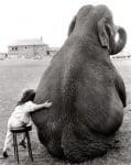 Момиченце със слон