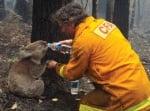 Пожарникар дава вода на коала