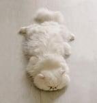 Бяло пухкаво коте