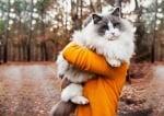 Голяма котка