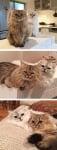 Пухкави котета