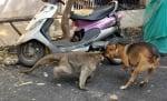 Маймуната защитава кученцето