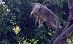 Маймуната и кученцето се катерят