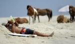 Диви коне на остров