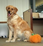 Домашно куче в офиса