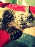Спящо коте