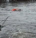 Магаре в река