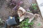 Куче, съборило саксия