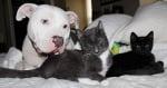 Франки с котенца