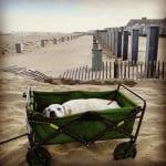 Пох в количка на плажа