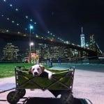 Пох в количка пред мост