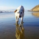 Кучето потапя лапи в Тихия океан