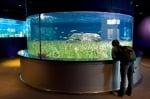 Аквариум Австралия