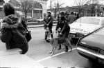 Полицейско куче в миналото
