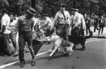 Полицейски кучета през 70-те
