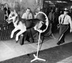 Куче минава препятствие