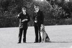 Минали полицейски кучета