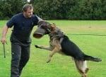 Тренировка на куче