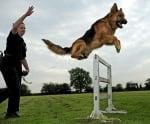 Скачане на куче