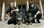 Полицаи с кучета