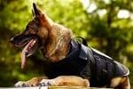 Куче с униформа