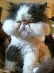 Вижте как изглеждат котките, когато са ужилени от пчела/оса