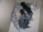 Котето ми и малките и