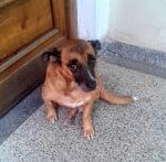 Едно мило куче