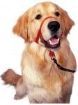 Нашийник през глава за предотвратяване на дърпането на кучето от Company of Animals, Англия