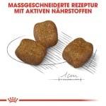 Храна за пораснали кучета от малки породи (до 10кг) с чувствителни зъби Royal Canin Mini Dental Care, две разфасовки