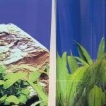 JBL FIXOL - Лепило за фон за аквариуми 50мл