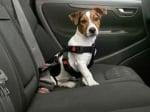 """""""Karlie"""" - Предпазен нагръдник за куче в автомобил"""