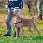 Нагръдник за куче Ferplast COACH P  - различни размери и цветове