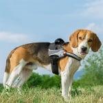Нагръдник за куче със светлоотразителни шевове Ferplast HERCULES - различни размери и цветове