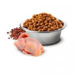 N&D QUINOA SKIN & COAT с пъдпъдъче месо - Пълноценна храна за котки в зряла възраст с пъдпъдъче месо, киноа, кокос и куркума. При хранителни чувствителности, полезна за възстановяване и поддържане на здравето на кожата и козината - две разфасовки