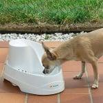 Фонтан за котки и малки кучета. С иновативен дизайн, наподобяващ извор, който стимулира животните да пият