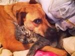 23 доказателства, че кучетата наистина са най - добрите ни приятели