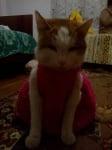 Моето коте Мърко