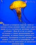 3 Ноември - Международен ден на медузите